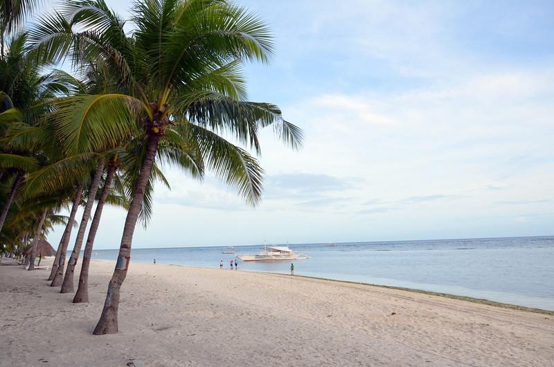 DSC_7016-beach-trees.JPG
