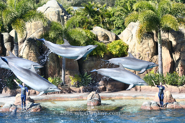 Seaworld - Gold Coast