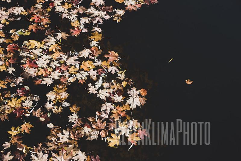 Graceland110218-271.jpg