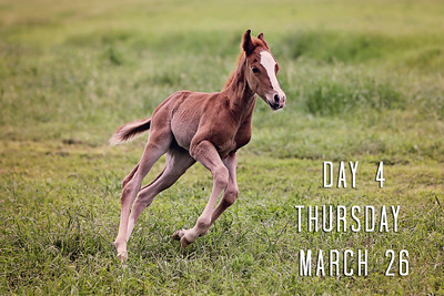 Day 4--Thursday, March 26