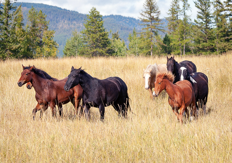 horse herd.jpg