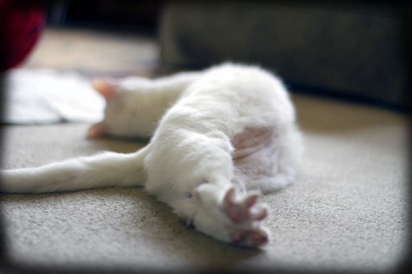 Nellie Stretching