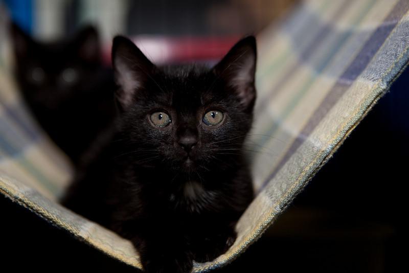 One of the Gerritsen Beach kittens. Paulie? Paula? Paulo?