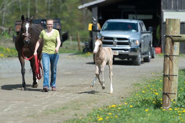 Foal 5-24-2020