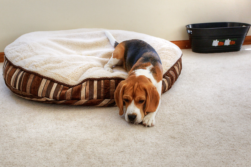 Brody Pillow 2.jpg