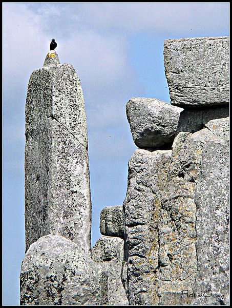 Raven, Stonehenge