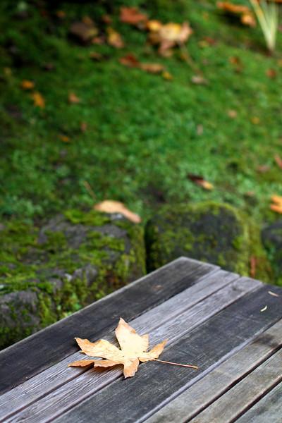 Portland Japanese Garden  11-11-11  3514.jpg