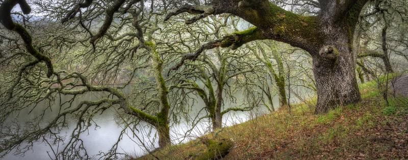 Suttonfield Lake & Oaks, Sonoma Valley, California