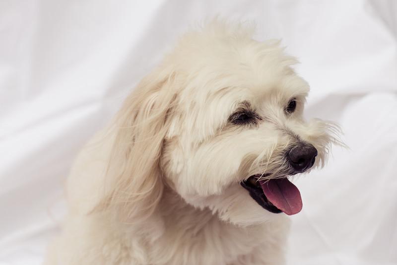 opal mike dogs (1 of 1)-75.jpg