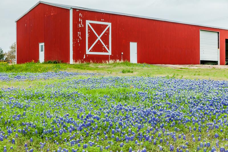 2015_4_3 Texas Wildflowers-7530.jpg