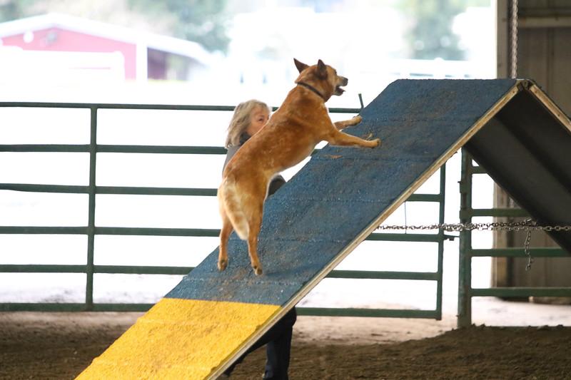 3-10-2019 Bloodhound-9109.jpg