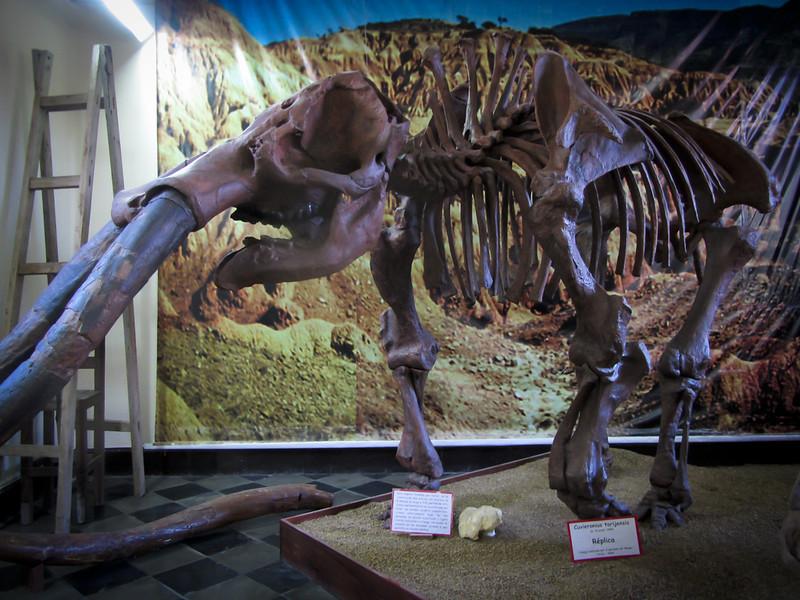 Tarija 201205 Museum Paleontology (14).jpg