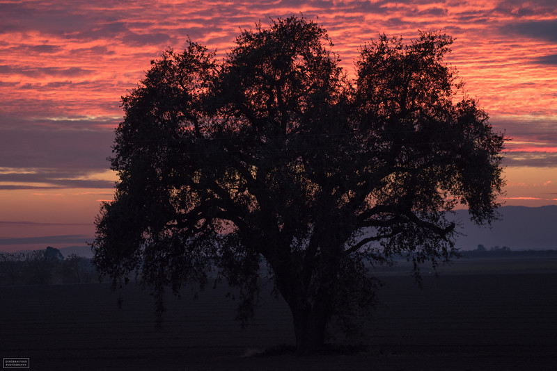 Yolo County Sunset
