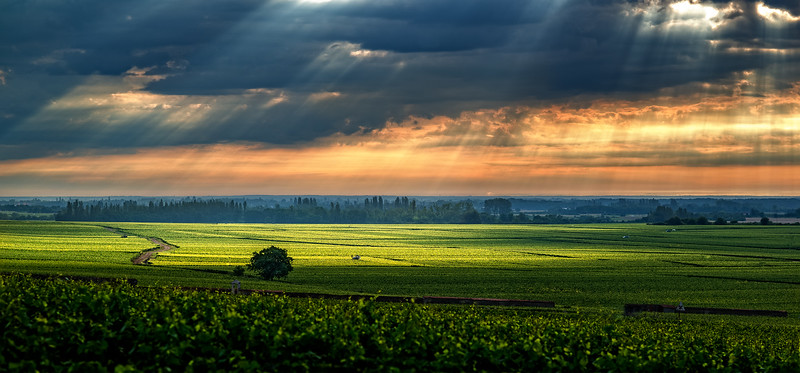 Meursault_Vineyards_Sunrise_2048-.jpg