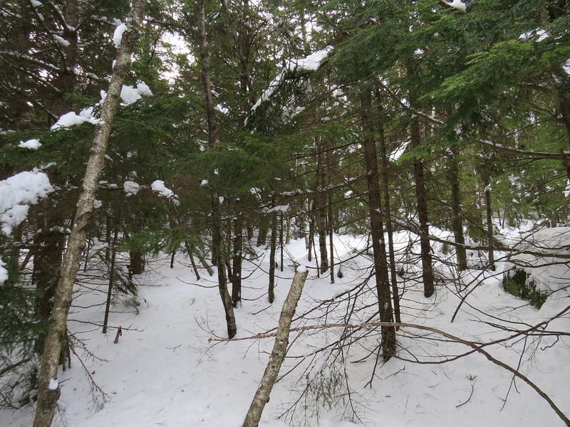 Not so fine woods.jpg