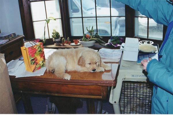 Eddie - the puppy years