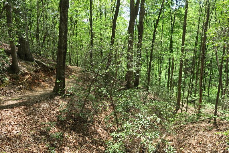Pinnacle Mountain Trail - 1,600'