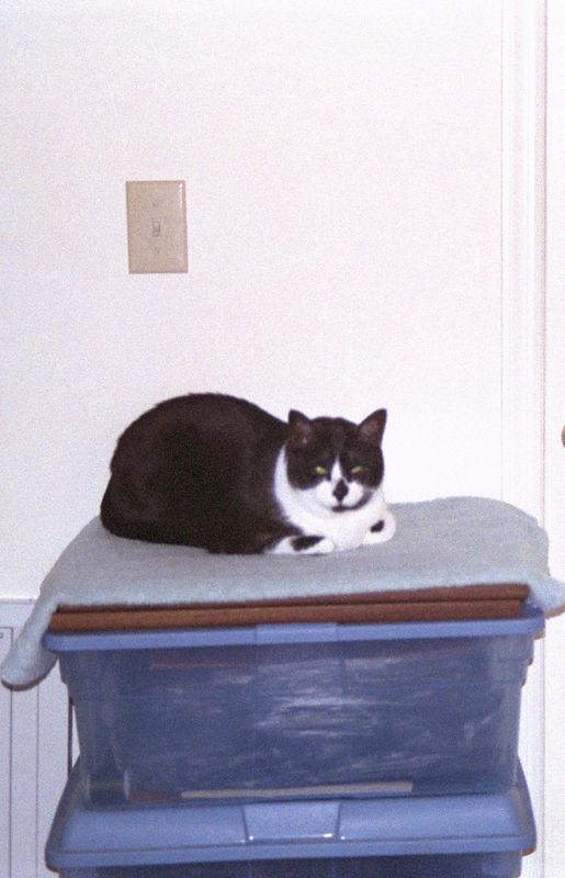 2003 12 - Cats 49.jpg