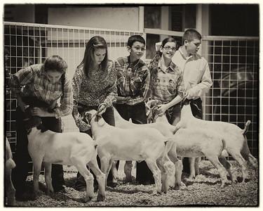 2013 Gerlach Livestock