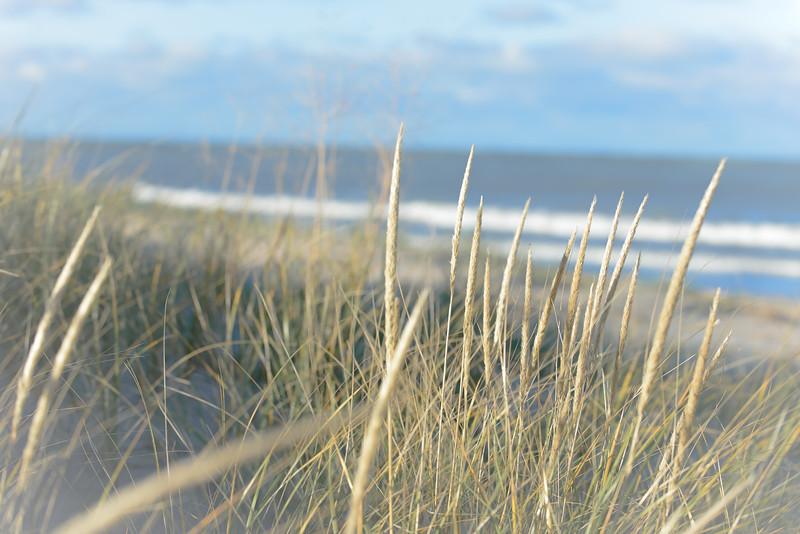 Grasses-7722.jpg