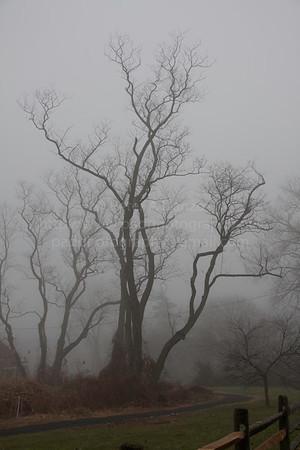 Foggy Morning 12-02-12