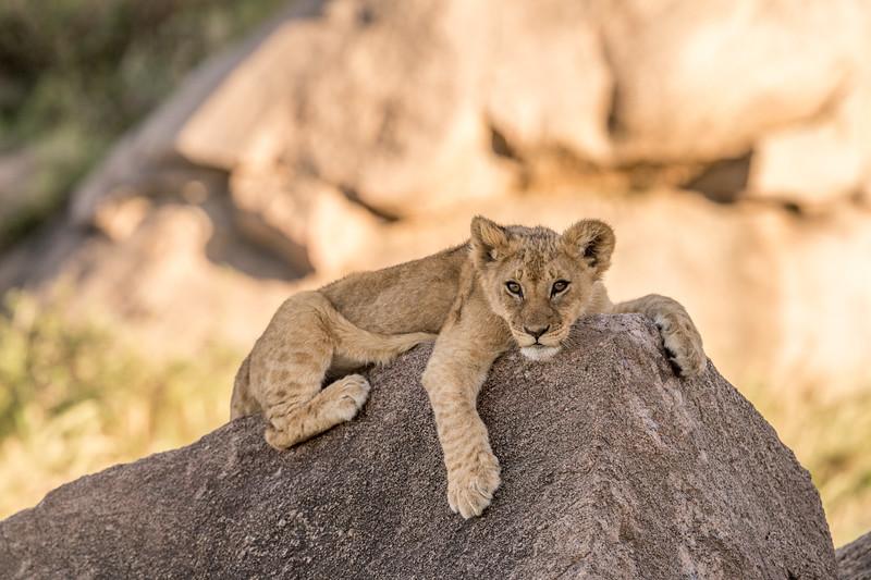 Tanzania_Feb_2018-531.jpg