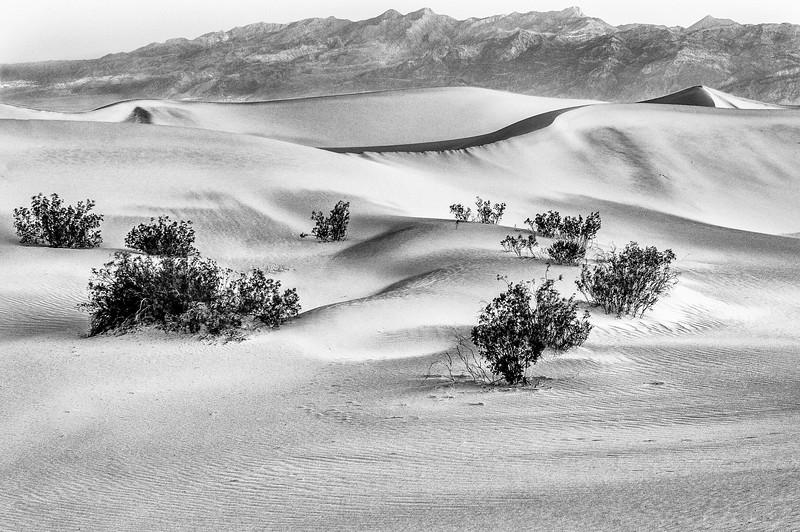 Dunes Again