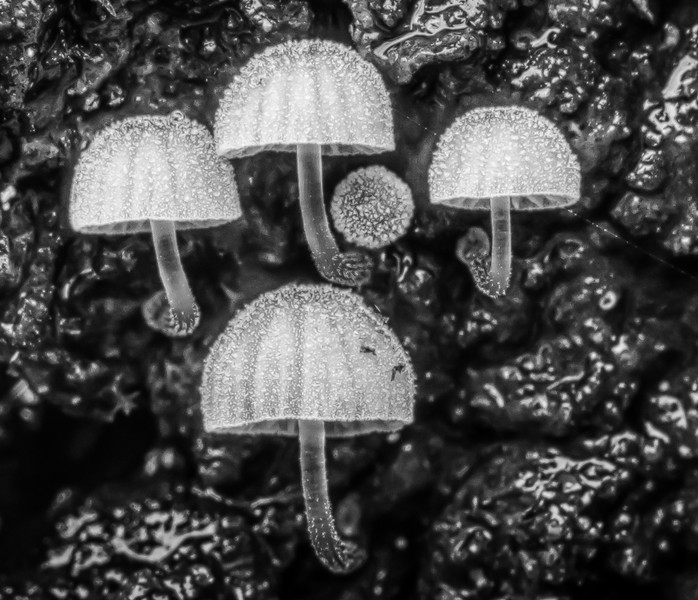 Frosted mushrooms