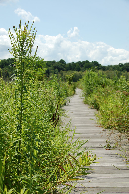 . Photos of the west basin of Mentor Marsh State Nature Preserve following ongoing restoration efforts by the Cleveland Museum of Natural History. (Courtesy City of Mentor)