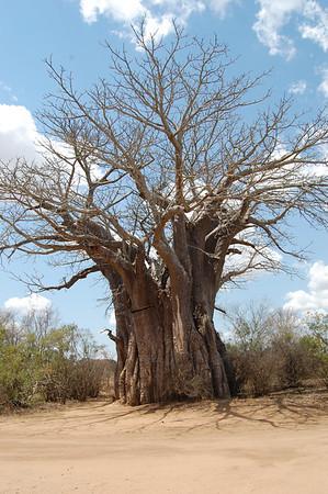 Kruger Landscapes