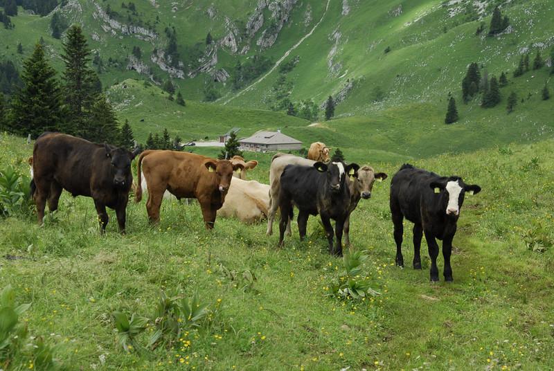 070626 7160 Switzerland - Geneva - Downtown Hiking Nyon David _E _L ~E ~L.JPG