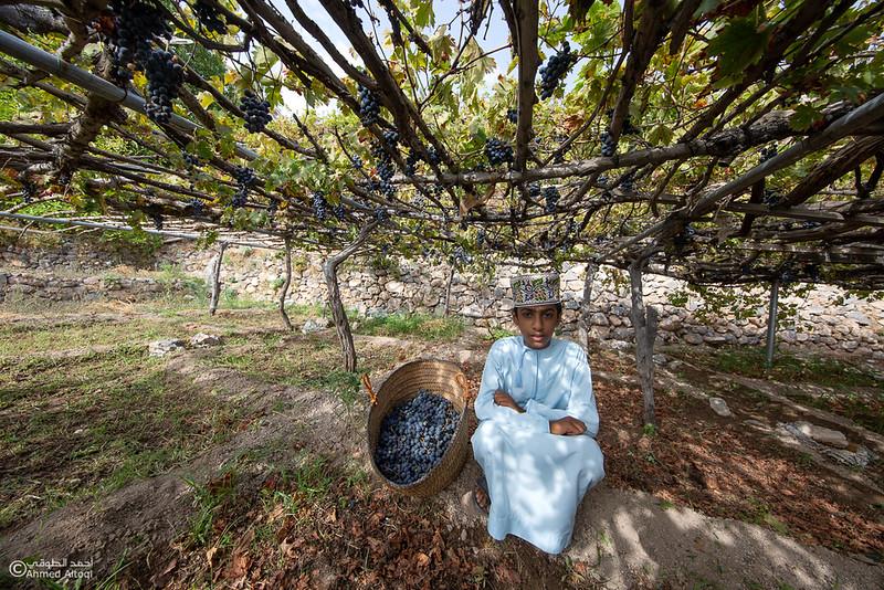 Grape - Wakan village - Nakhal222- Oman.jpg