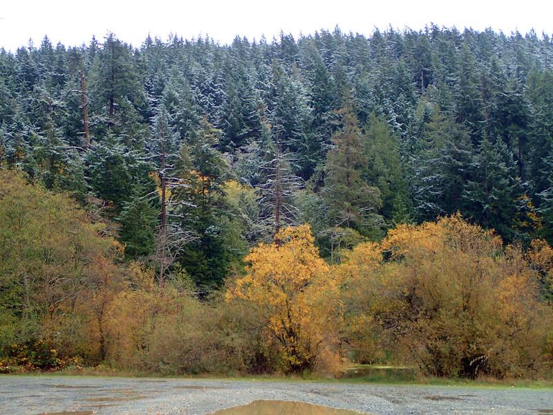 PB030111 Lake Erie winter Fall forest.jpg
