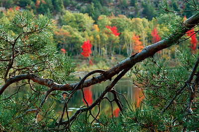 Autumn scene in Acadia National Park, Maine.