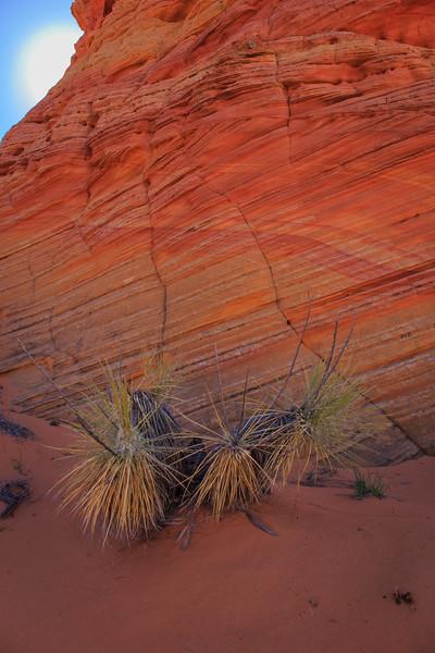 Utah-AZ ahoot-1104.jpg