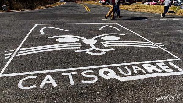 Cat Square 2016