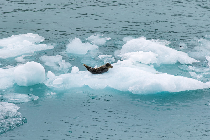 Alaska 2015 - Hubbard Glacier -  072415-014.jpg