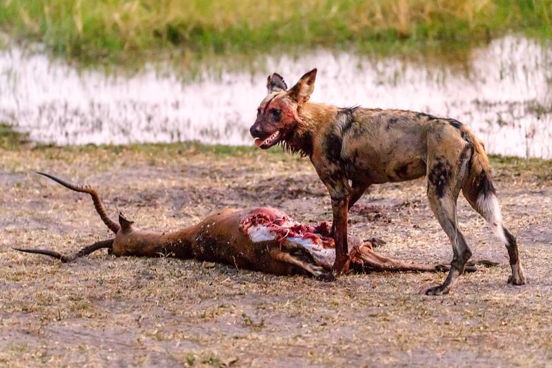 Botswana_0818_PSokol-1738.jpg