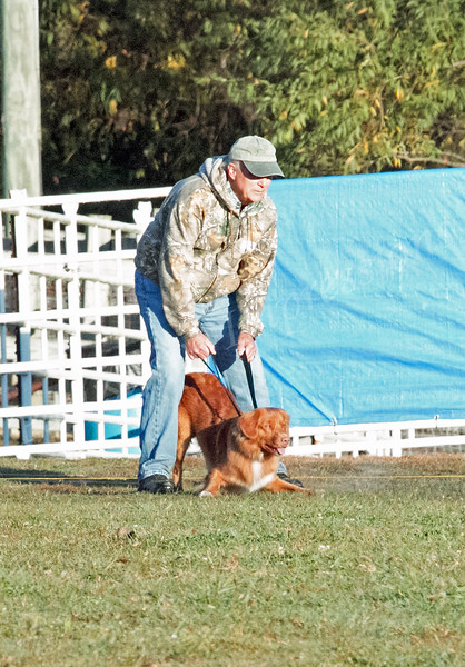 Thursday 2015 GSDCA National Specialty Lure Coursing 10 15  15