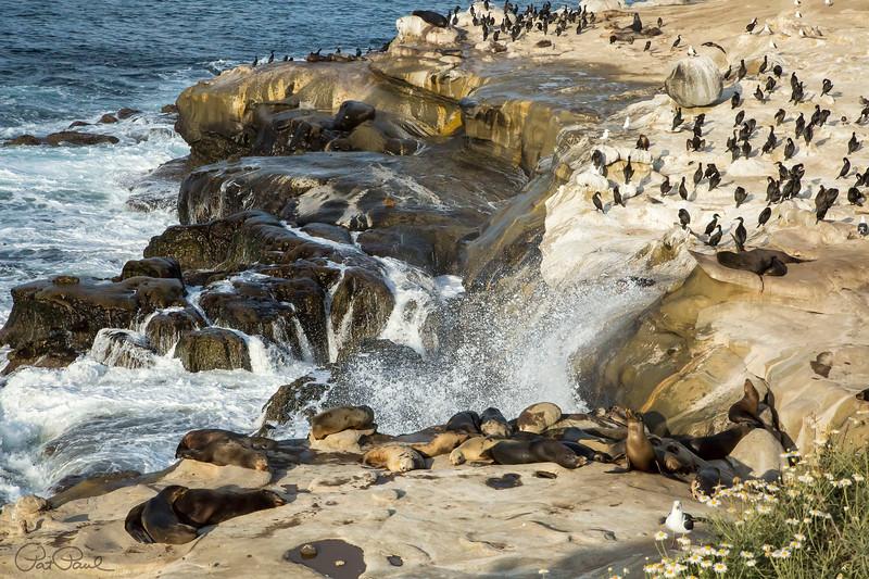 La Jolla Shoreline I