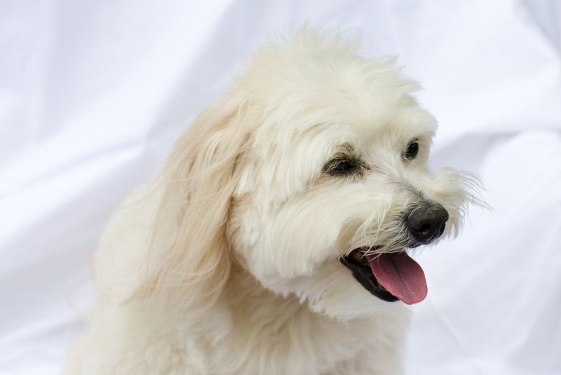 opal mike dogs (1 of 1)-74.jpg