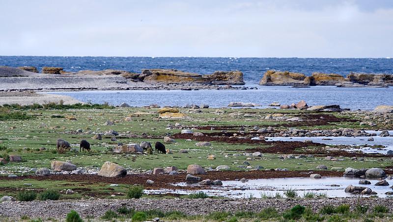 Gotland 20110608_0046.jpg