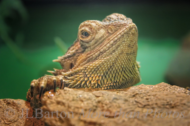 What a beard!
