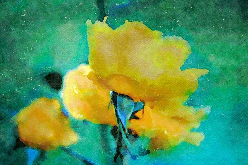 December 12 - Yellow roses of a warm December.jpg