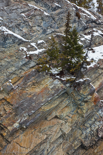 Darwin Wiggett Winter Photo Tour 2010