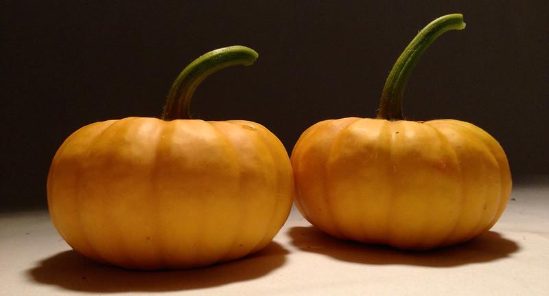 Fall harvest.