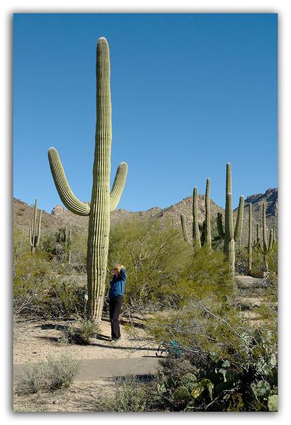 Thats-a-tall-Cactus.jpg