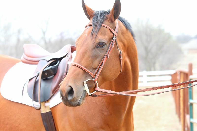 Horse6851web.jpg