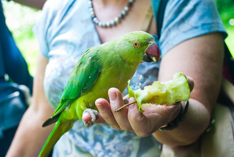 Hyde PArk Birds (23 of 25).jpg