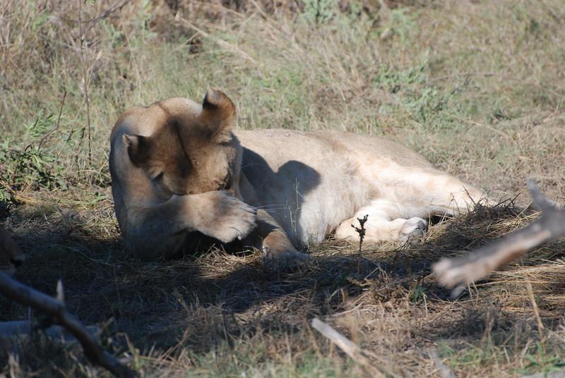 Botswana - Bill Forsyth